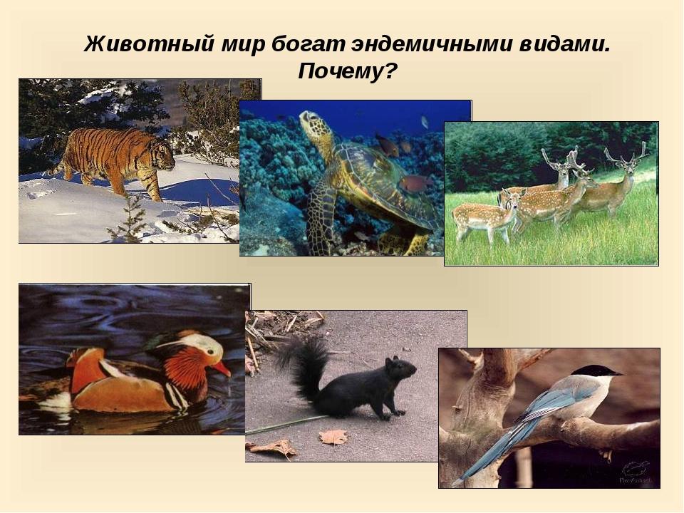Животный мир богат эндемичными видами. Почему?