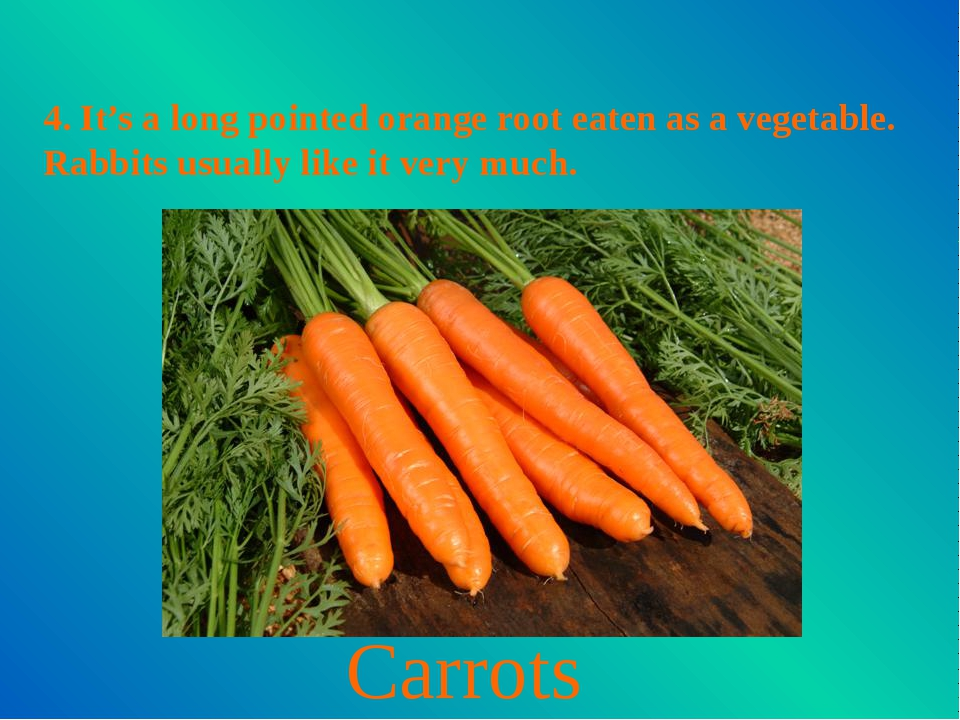 4. It's a long pointed orange root eaten as a vegetable. Rabbits usually like...