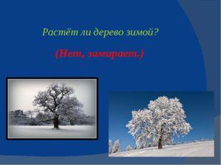Растёт ли деревозимой? (Нет, замирает.)