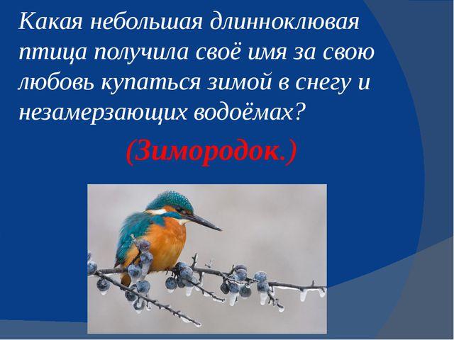 Какая небольшая длинноклювая птица получила своё имя за свою любовь купаться...