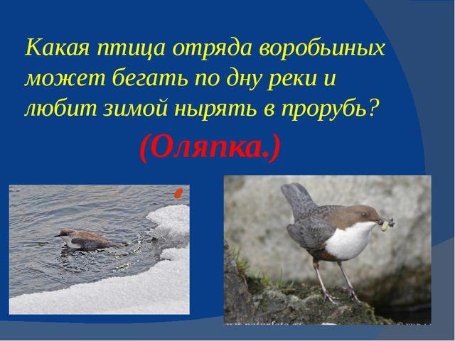 Какая птица отряда воробьиных может бегать по дну реки и любитзимойнырять в...