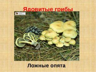 Ядовитые грибы Ложные опята