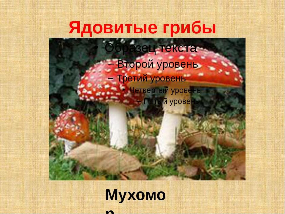 Ядовитые грибы Мухомор
