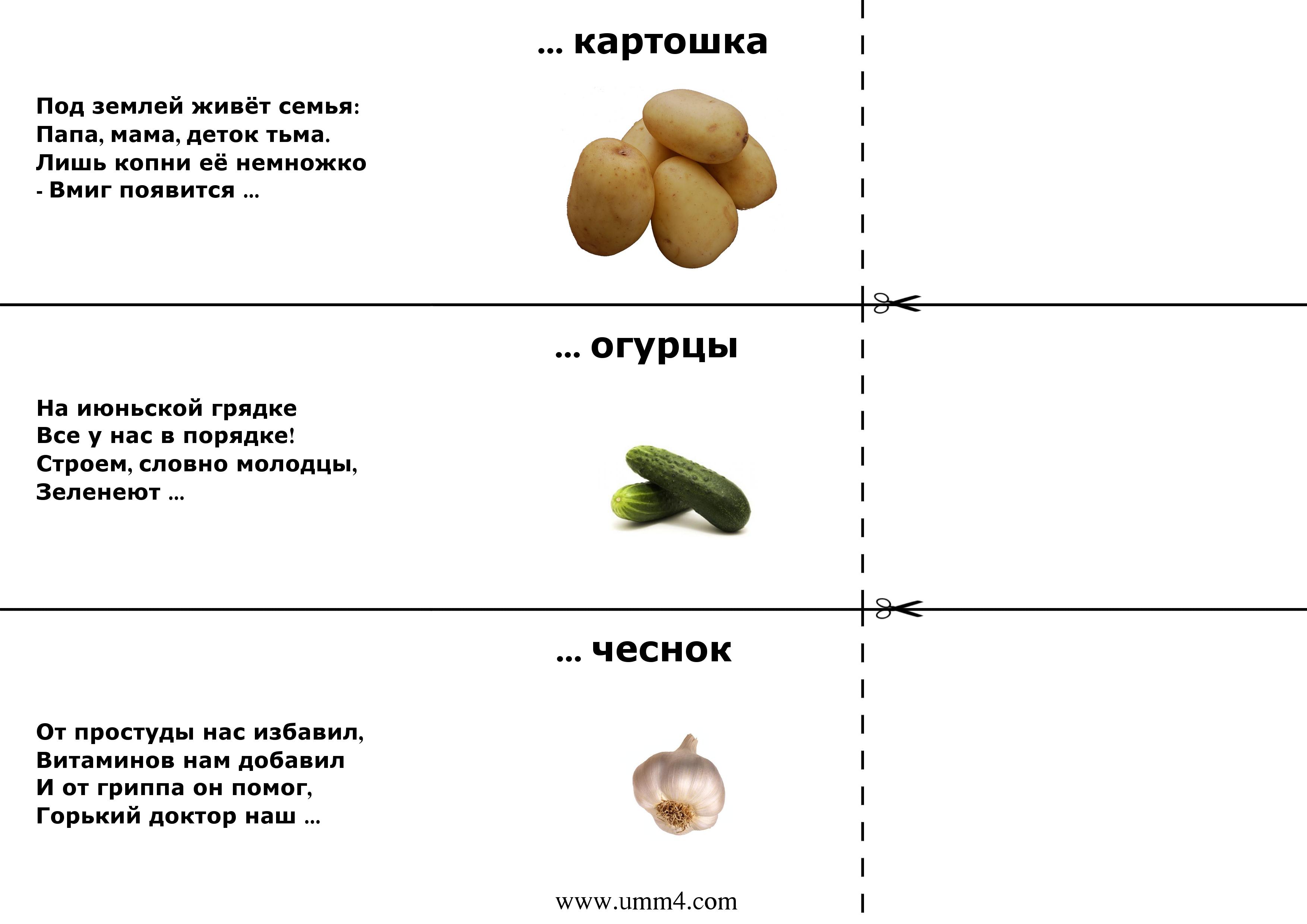 Загадки про овощи и фрукты с картинками