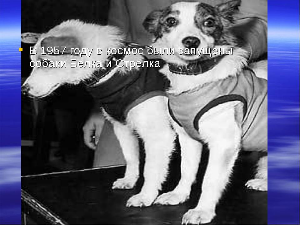 Первые космонавты В 1957 году в космос были запущены собаки Белка и Стрелка