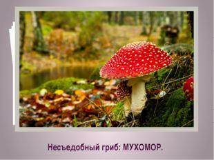 Несъедобный гриб: МУХОМОР.