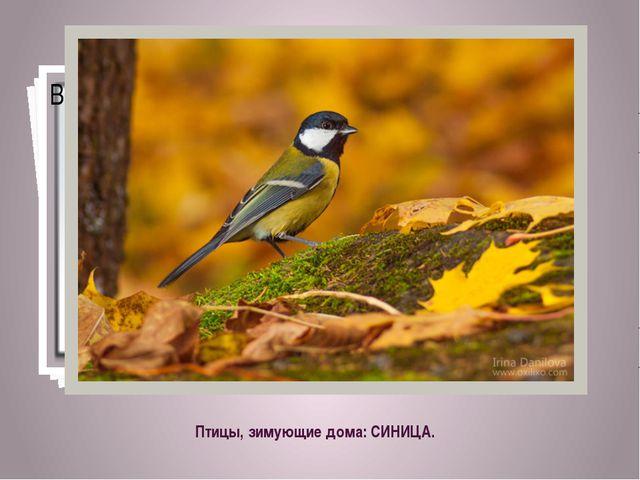 Птицы, зимующие дома: СИНИЦА.