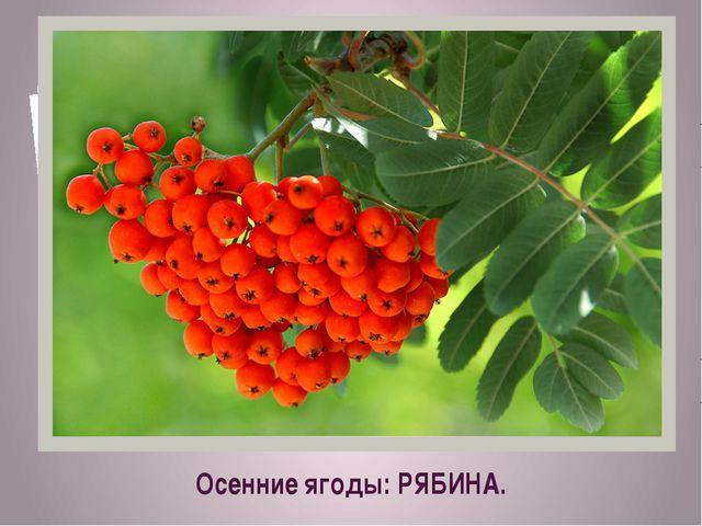 Осенние ягоды: РЯБИНА.