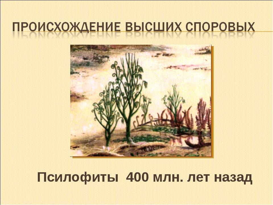 Псилофиты 400 млн. лет назад