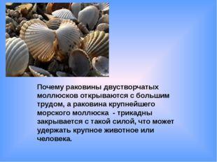 Почему раковины двустворчатых моллюсков открываются с большим трудом, а раков