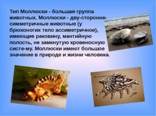 Тип Моллюски - большая группа животных. Моллюски - дву-сторонне-симметричные