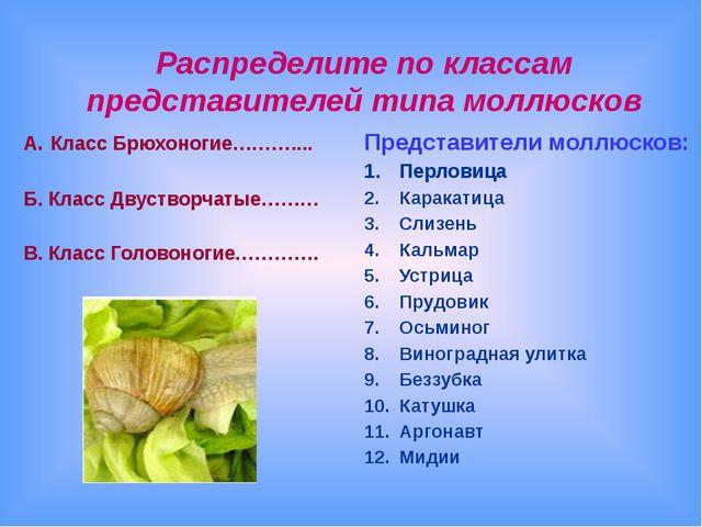 Распределите по классам представителей типа моллюсков А. Класс Брюхоногие………....