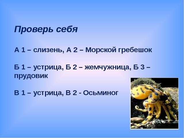 Проверь себя А 1 – слизень, А 2 – Морской гребешок Б 1 – устрица, Б 2 – жемч...