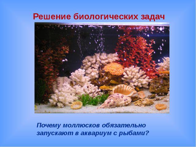 Почему моллюсков обязательно запускают в аквариум с рыбами? Решение биологиче...