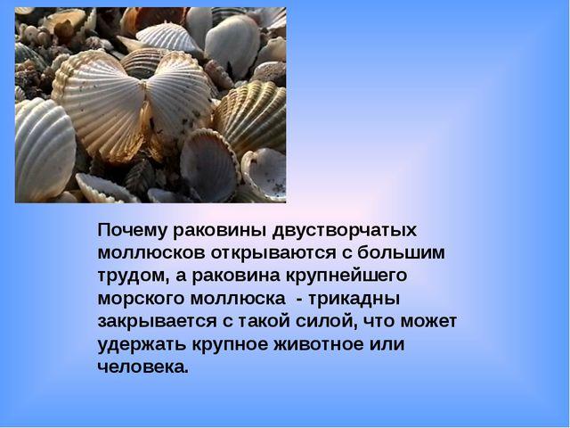 Почему раковины двустворчатых моллюсков открываются с большим трудом, а раков...