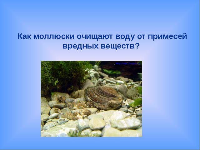 Как моллюски очищают воду от примесей вредных веществ?