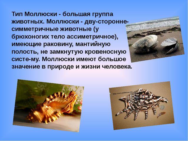 Тип Моллюски - большая группа животных. Моллюски - дву-сторонне-симметричные...