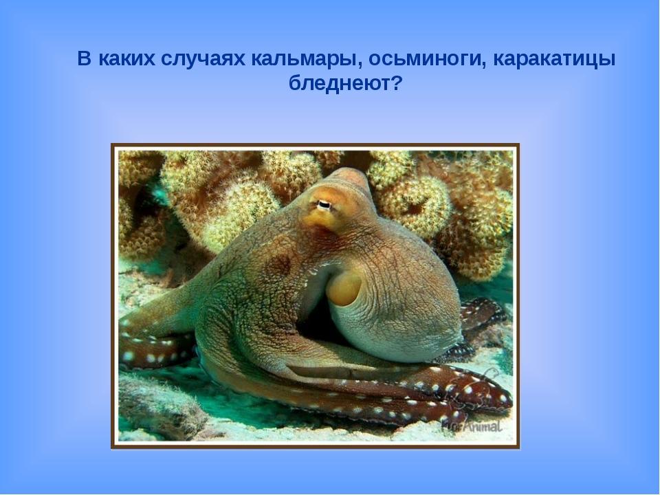 В каких случаях кальмары, осьминоги, каракатицы бледнеют?