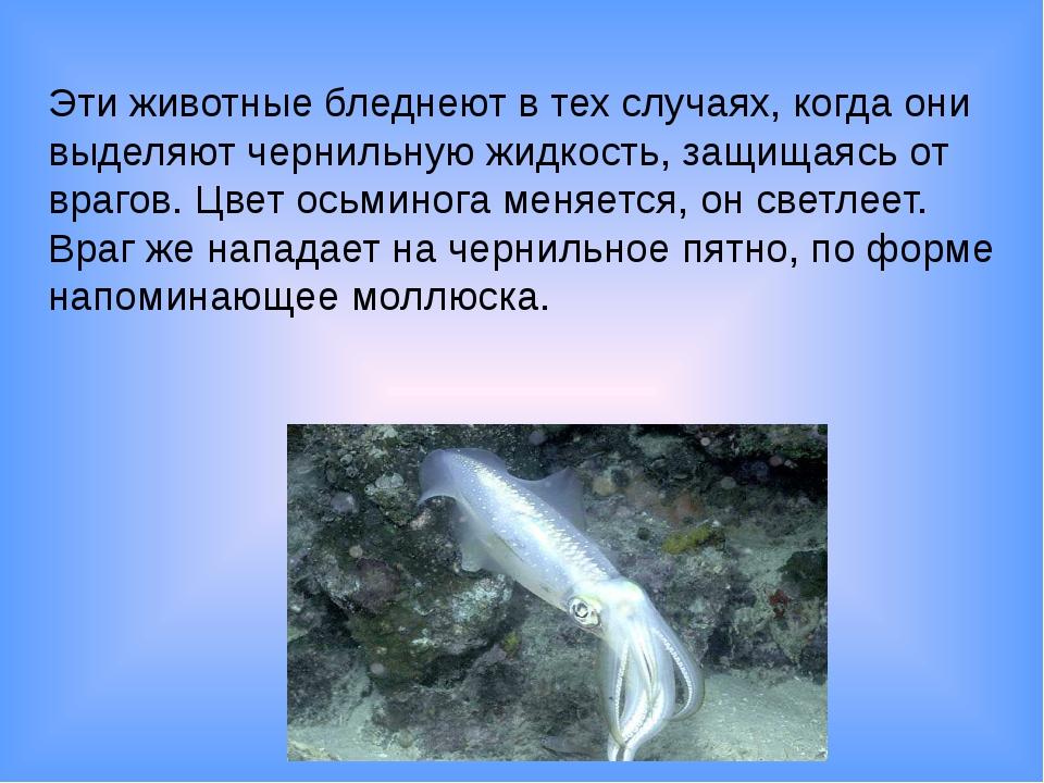 Эти животные бледнеют в тех случаях, когда они выделяют чернильную жидкость,...
