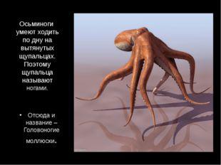 Осьминоги умеют ходить по дну на вытянутых щупальцах. Поэтому щупальца называ
