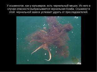 У осьминогов, как у кальмаров, есть чернильный мешок. Из него в случае опасно