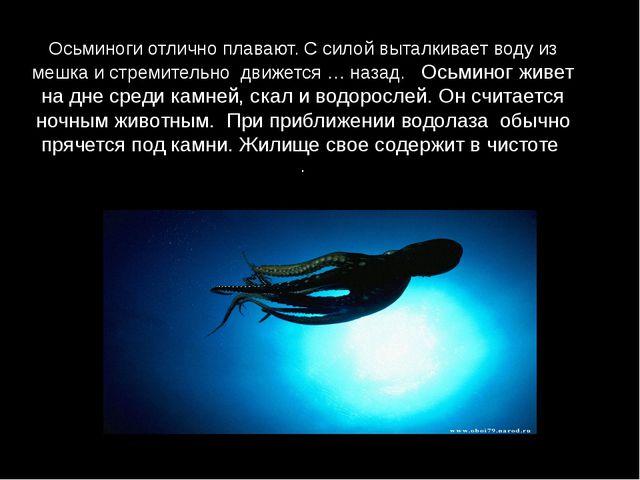Осьминоги отлично плавают. С силой выталкивает воду из мешка и стремительно д...