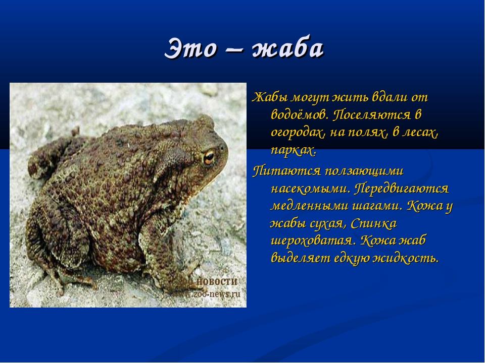 Это – жаба Жабы могут жить вдали от водоёмов. Поселяются в огородах, на полях...