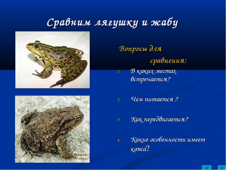 Сравним лягушку и жабу Вопросы для сравнения: В каких местах встречается? Чем...