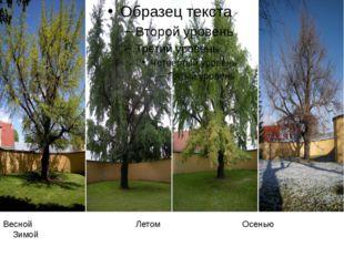 Весной Летом Осенью Зимой