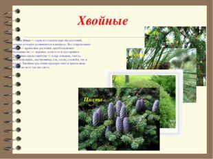 Хвойные Хво́йные— один из отделов царства растений, семена которых развивают