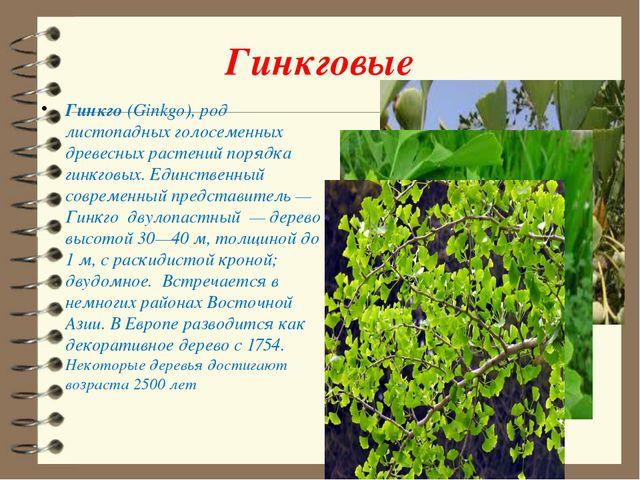 Гинкговые Гинкго (Ginkgo), род листопадных голосеменных древесных растений по...