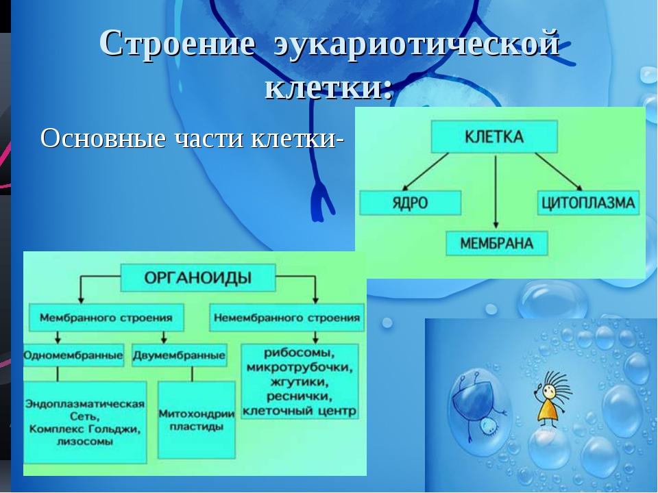 Строение эукариотической клетки: Основные части клетки-
