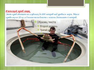 Японский краб-паук Этот краб обитает на глубинах до 800 метров над уровнем мо