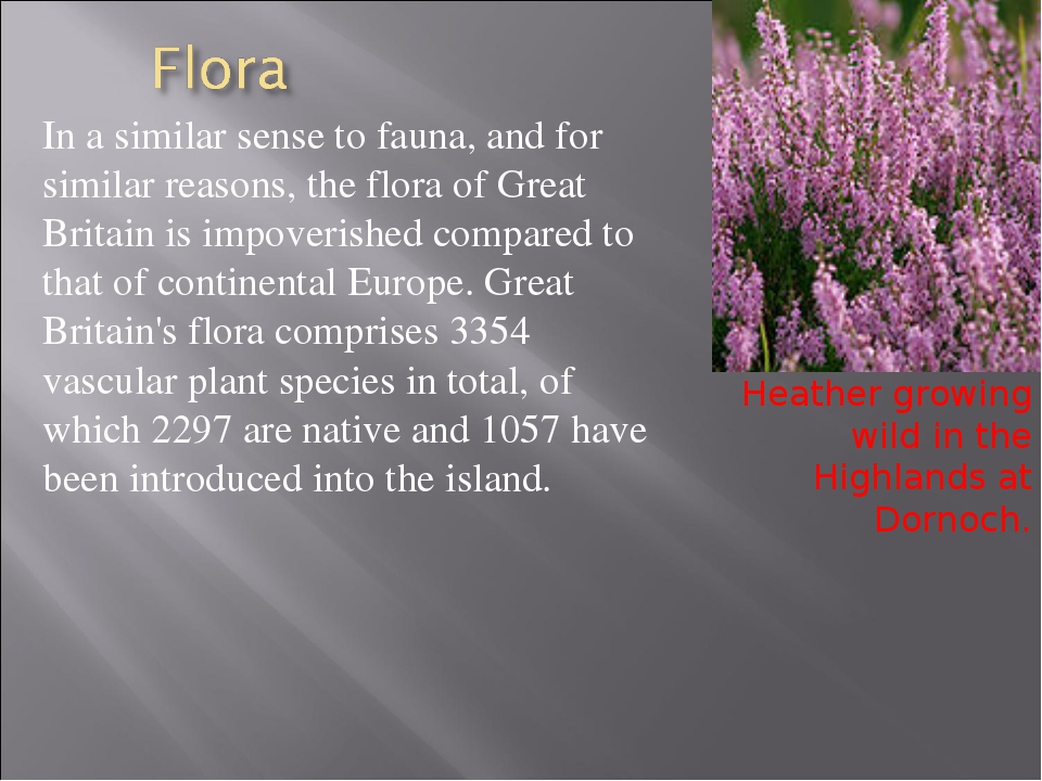 In a similar sense to fauna, and for similar reasons, the flora of Great Brit...