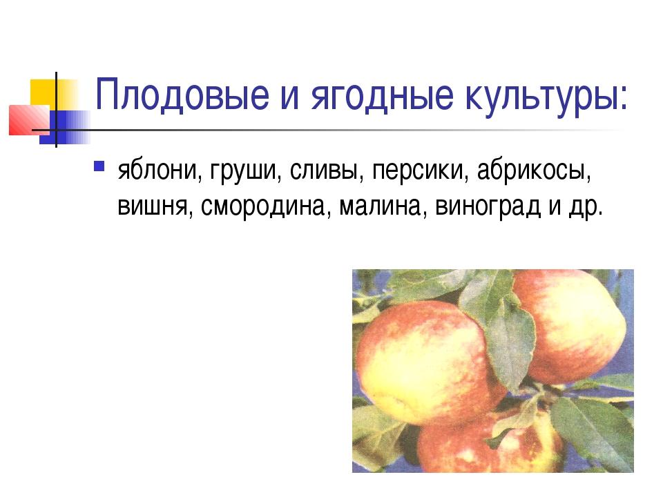 Плодовые и ягодные культуры: яблони, груши, сливы, персики, абрикосы, вишня,...
