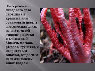 Поверхность плодового тела окрашена в красный или оранжевый цвет, а споронос