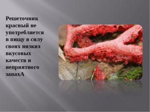 Решеточник красный не употребляется в пищу в силу своих низких вкусовых качес
