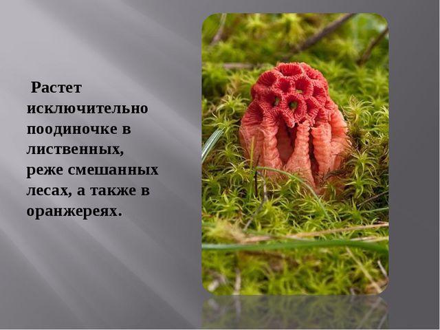 Растет исключительно поодиночке в лиственных, реже смешанных лесах, а также...