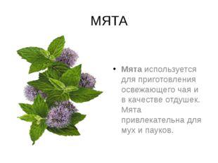 МЯТА Мятаиспользуется для приготовления освежающего чая и в качестве отдушек