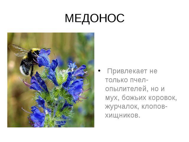 МЕДОНОС Привлекает не только пчел-опылителей, но и мух, божьих коровок, журч...
