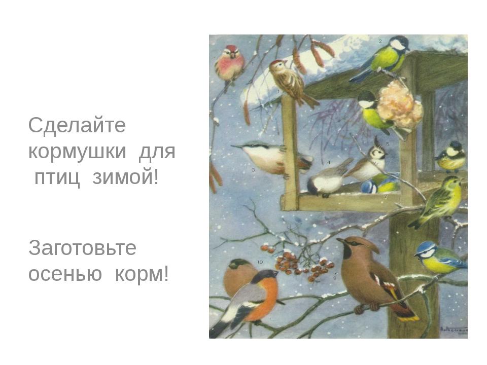 Сделайте кормушки для птиц зимой! Заготовьте осенью корм!