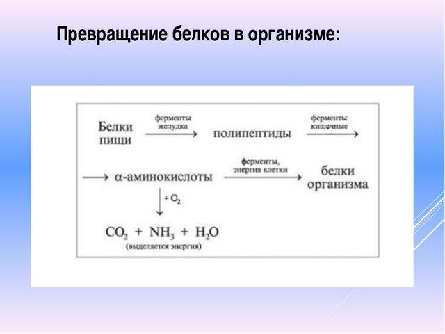 Превращение белков в организме: