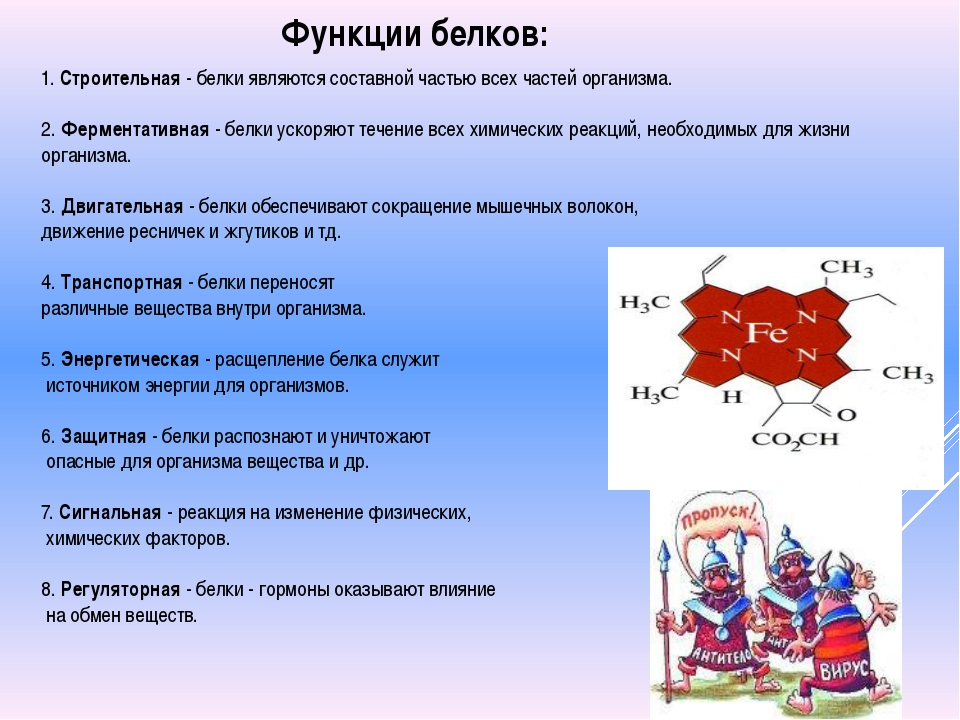 1. Строительная - белки являются составной частью всех частей организма. 2. Ф...