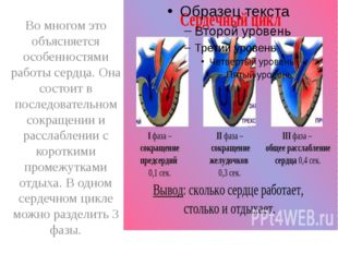 Во многом это объясняется особенностями работы сердца. Она состоит в последо