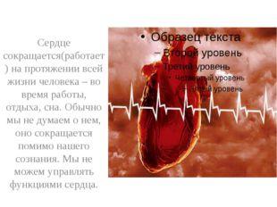 Сердце сокращается(работает) на протяжении всей жизни человека – во время ра
