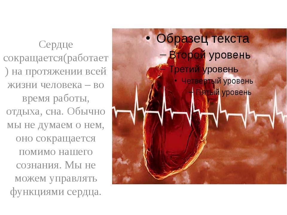 Сердце сокращается(работает) на протяжении всей жизни человека – во время ра...