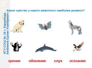 Какое чувство у какого животного наиболее развито? зрение обоняние слух осяза
