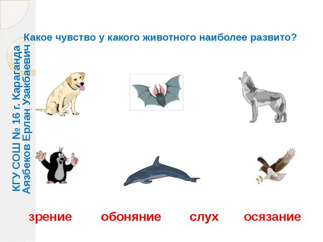 Какое чувство у какого животного наиболее развито? зрение обоняние слух осяза...