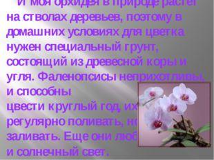 И моя орхидея в природе растет на стволах деревьев, поэтому в домашних услов