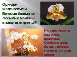 Орхидеи Фаленопсис и Венерин башмачок - любимые мамины комнатные цветы!!!! Их